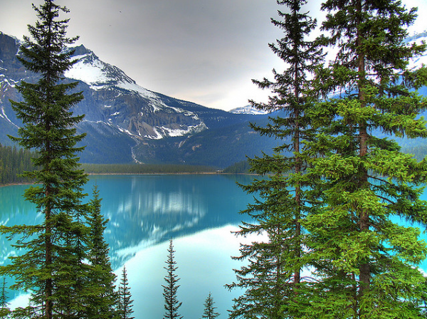 BC's Emerald Lake By panduh on Flickr